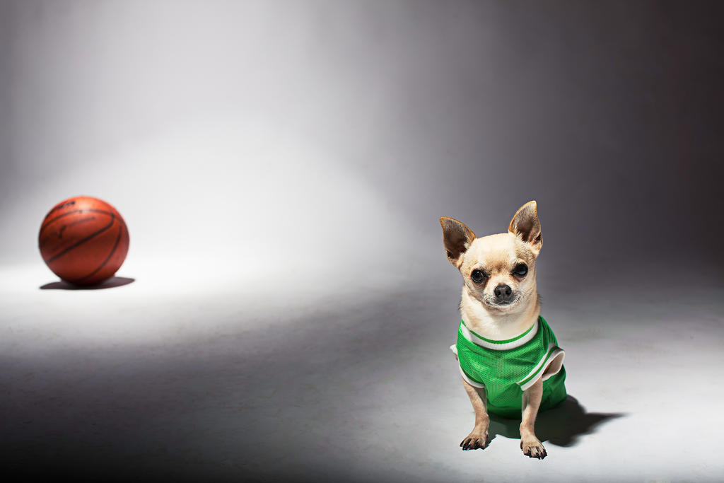 Halftime Chihuahuas: or when did the game of pro basketball get lost?